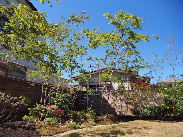 木陰と水辺のある庭